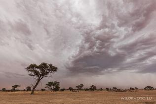 Storm in Kalahari