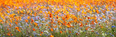 Look the flowers on the fields