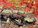 """Jesus Christ says to his disciples: """"I am the vine, you are the branches."""""""