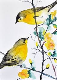 Birds yellow