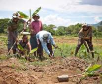 farmers-in-zimbabwe