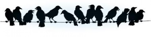 cropped-crows-in-a-line